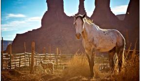 Horse Slaughter Legislation