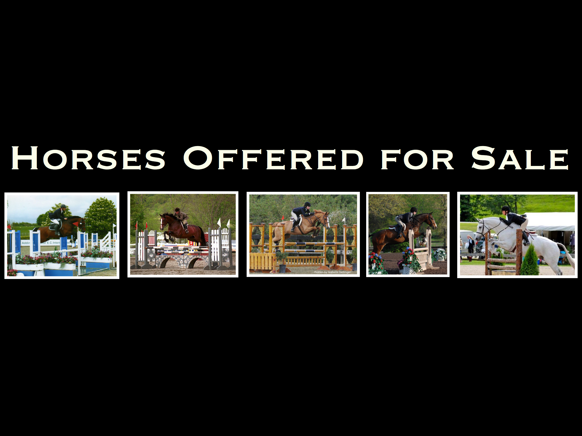 Horses Offered for Sale