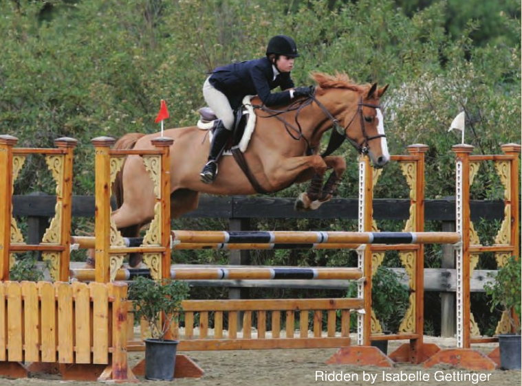 Hunter Jumper Horses Offered for Sale