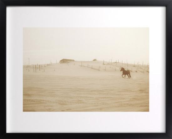 Wild and Free Custom Wall Horse Art