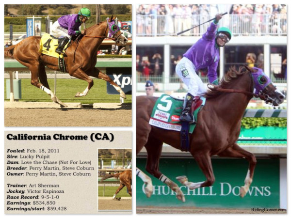 California Chrome 2014 Kentucky Derby Winner