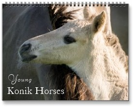 2015 young konik horses photo calendars, Horse Calendars