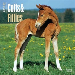 Colts & Fillies Calendar 2015, Horse Calendars