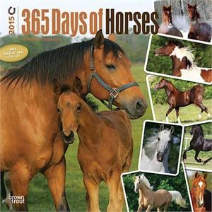 Horses 365 Days Calendar 2015, Horse Calendars