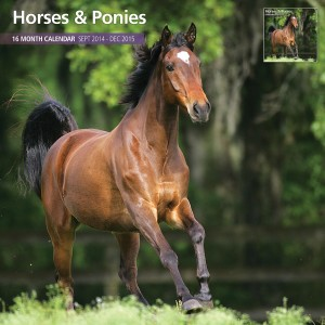 Magnet & Steel Horses and Ponies 2015 Wall Calendar, Horse Calendars