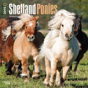 Shetland Ponies 2015, Horse Calendars