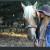 Horse & Pony Halter Covers